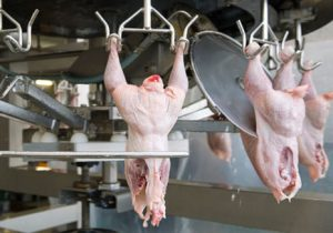 Global Poultry Meat Processing Equipment Market