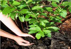 Biological Organic Fertilizer Market