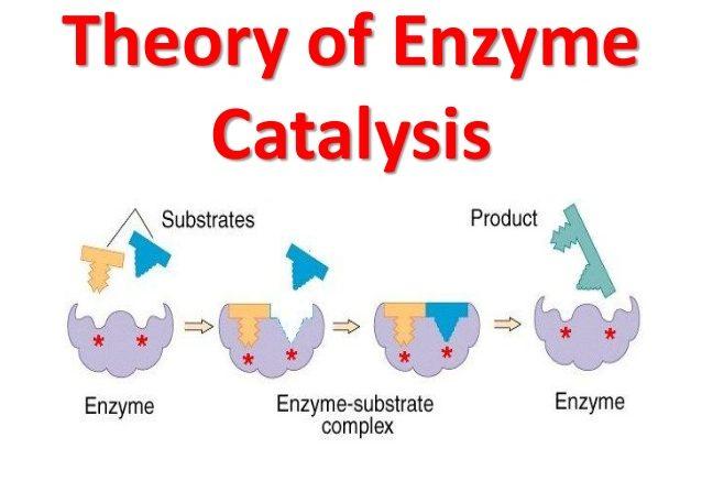 Enzymatic Catalyst Market