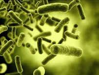 Microbial Agent Market