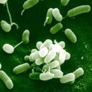 Biofungicide Market