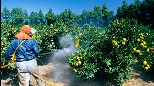 Botanical Pesticides Market