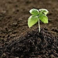 Peat-based Soils Market