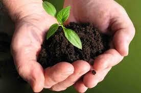 Phosphate Solubilizing Bacteria Bio-fertilizers Market