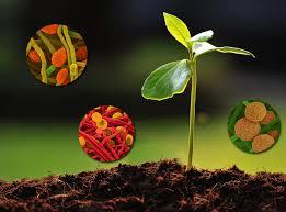 Biostimulants Market