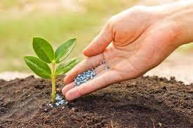 Nitrogenous Fertilizer Market
