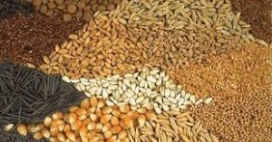Compound Feeds and Additives