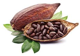Cocoa Beans Market