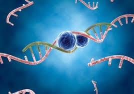 RNA Interference (RNAi) Drug Delivery Market